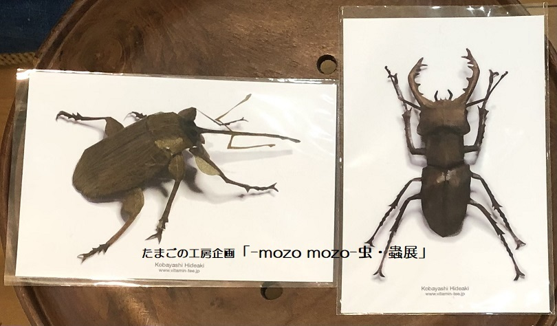 たまごの工房企画「-mozo mozo- 虫・蟲展」 その8_e0134502_19531346.jpg