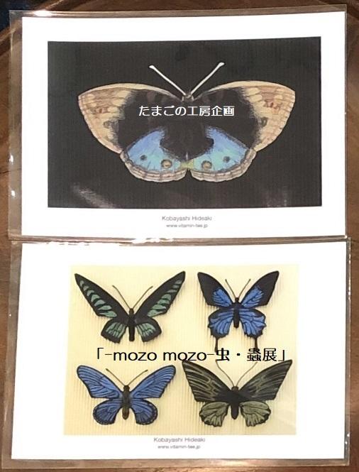 たまごの工房企画「-mozo mozo- 虫・蟲展」 その8_e0134502_19531825.jpg