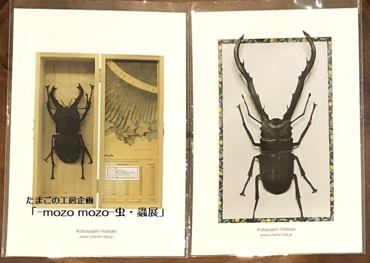 たまごの工房企画「-mozo mozo- 虫・蟲展」 その8_e0134502_19540057.jpg