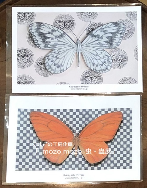 たまごの工房企画「-mozo mozo- 虫・蟲展」 その8_e0134502_19541069.jpg
