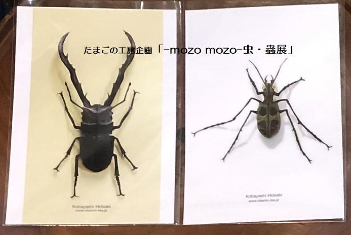 たまごの工房企画「-mozo mozo- 虫・蟲展」 その8_e0134502_19542594.jpg