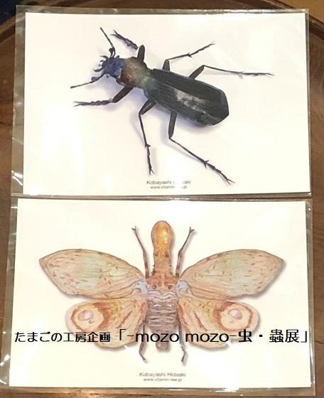 たまごの工房企画「-mozo mozo- 虫・蟲展」 その8_e0134502_19550278.jpg
