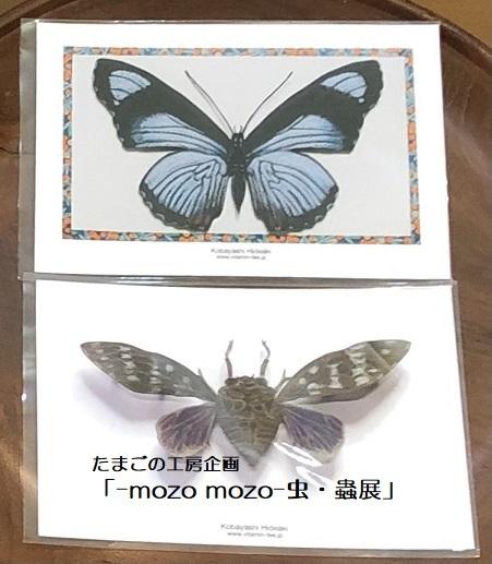 たまごの工房企画「-mozo mozo- 虫・蟲展」 その8_e0134502_19550953.jpg