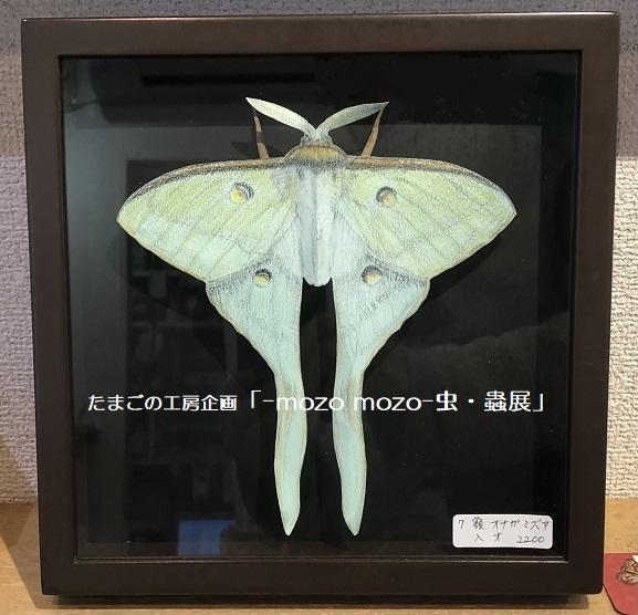 たまごの工房企画「-mozo mozo- 虫・蟲展」 その8_e0134502_19554060.jpg