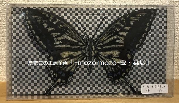 たまごの工房企画「-mozo mozo- 虫・蟲展」 その8_e0134502_19554953.jpg