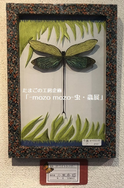 たまごの工房企画「-mozo mozo- 虫・蟲展」 その8_e0134502_19560026.jpg