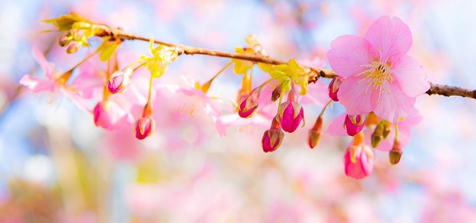 春 間近!_a0265606_17263065.jpg