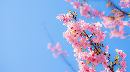 春 間近!_a0265606_17264268.jpg