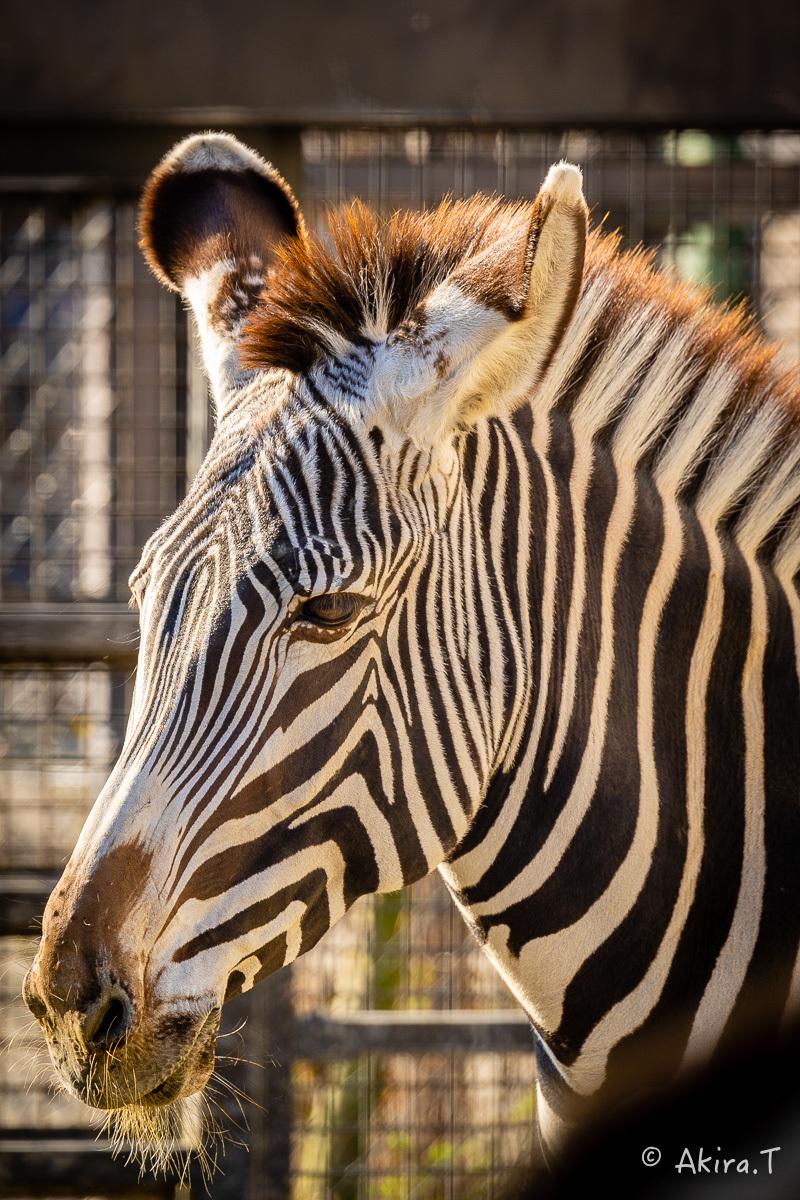 京都市動物園 -2-_f0152550_21354798.jpg