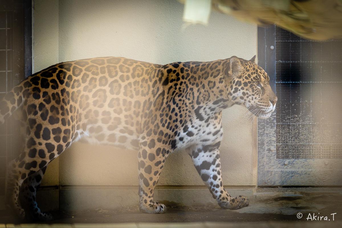 京都市動物園 -2-_f0152550_21360577.jpg