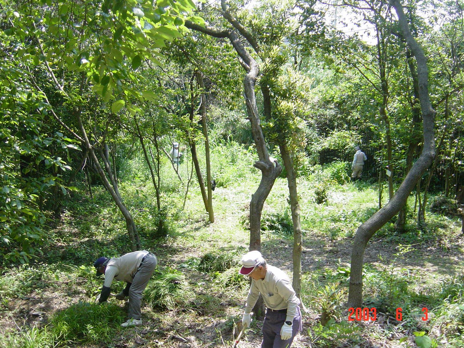 うみべの森の歴史⑬「2003年6月の活動」_c0108460_11510031.jpg
