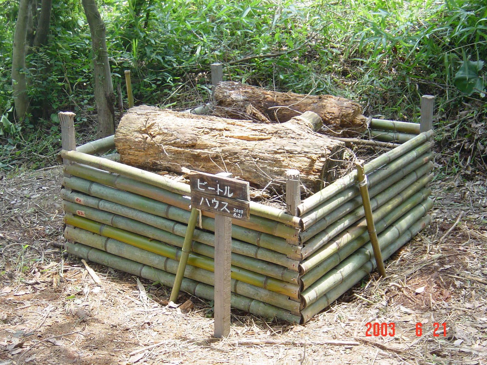 うみべの森の歴史⑬「2003年6月の活動」_c0108460_12361775.jpg