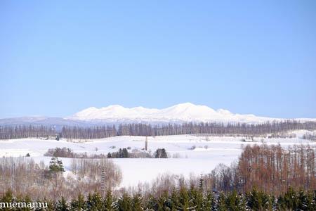 新栄の丘から大雪連峰~1月の美瑛_d0340565_16535500.jpg