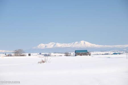 新栄の丘から大雪連峰~1月の美瑛_d0340565_16540996.jpg