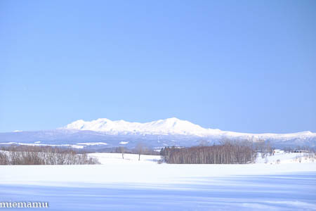 新栄の丘から大雪連峰~1月の美瑛_d0340565_16541588.jpg