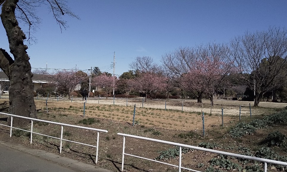 恐る恐る行く東京都心_f0291565_13371509.jpg