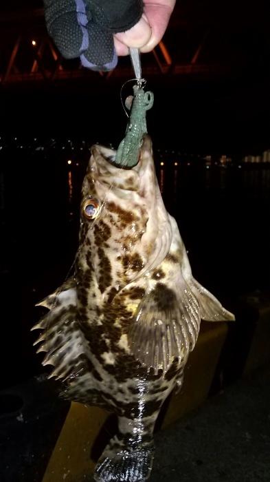 2021 1月後半から2月の釣り_b0163792_03042382.jpg