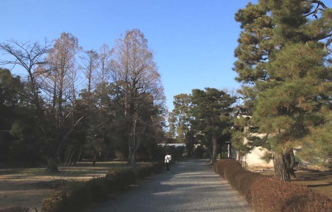 白梅が咲き揃った 二条城_e0048413_18053956.jpg