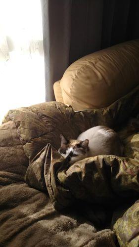 😸猫 とインド_c0155326_10092417.jpg