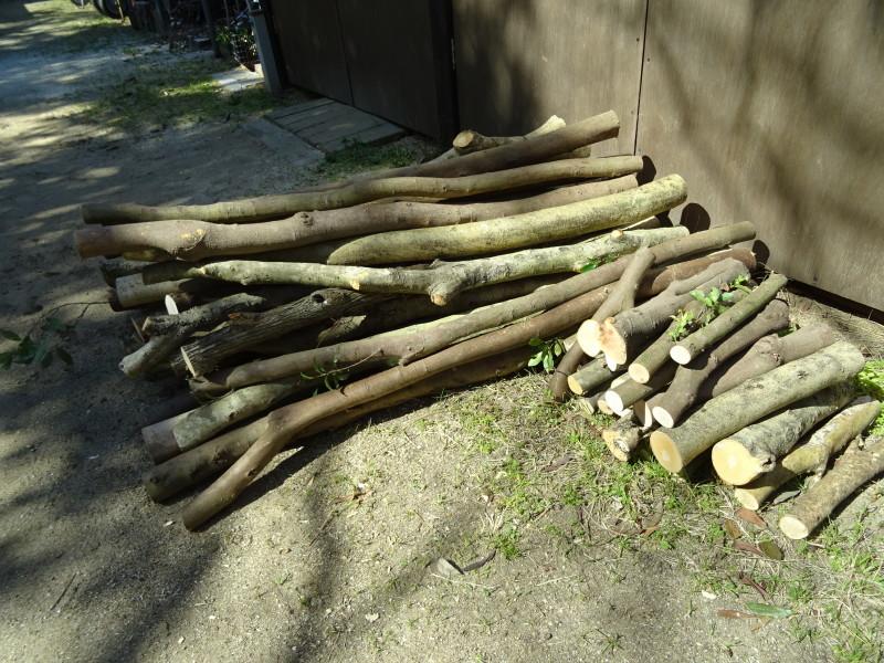 間伐と杭作り準備・・・うみべの森_c0108460_14521610.jpg