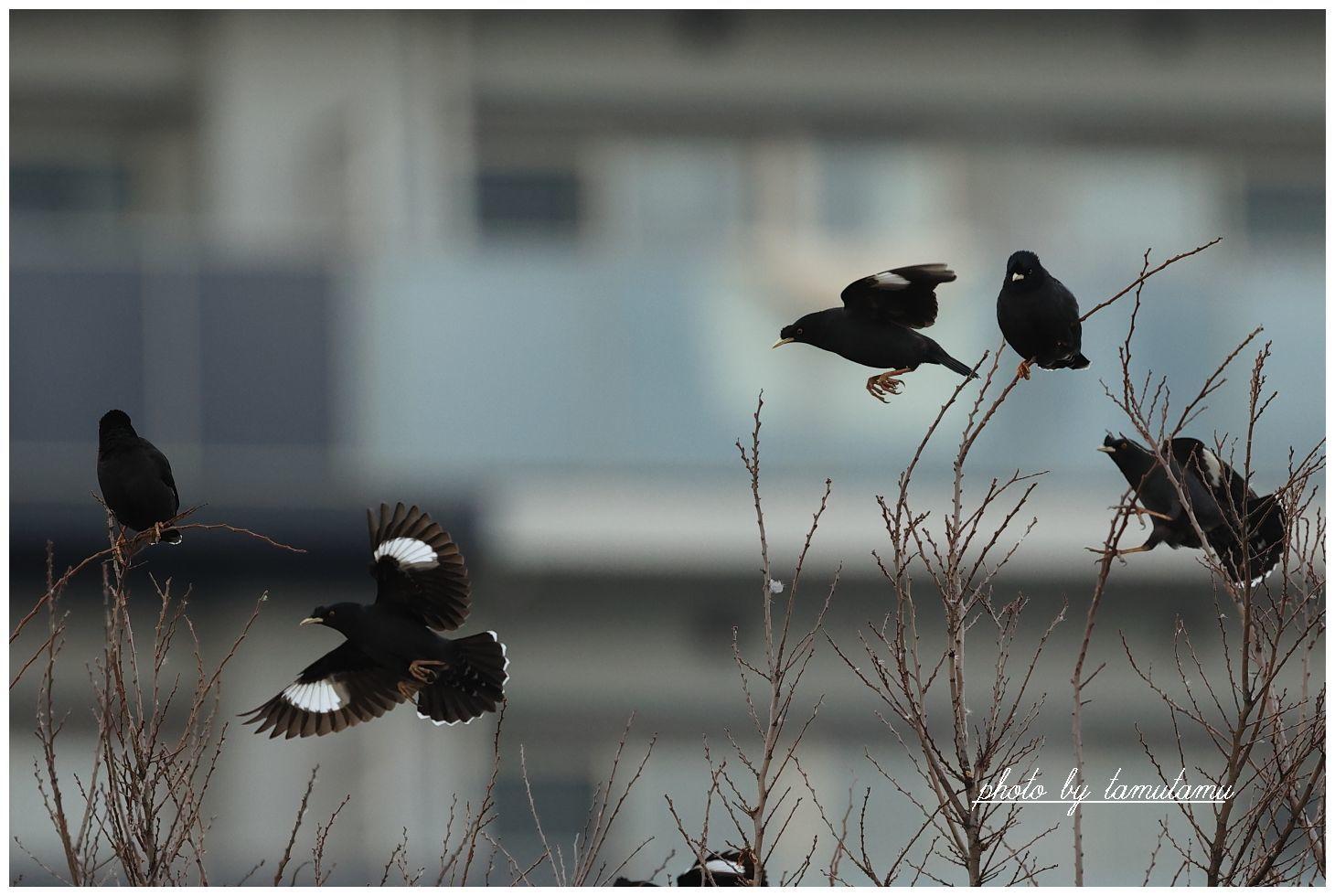 2月の河川敷 Ⅱ_e0351179_22423408.jpg