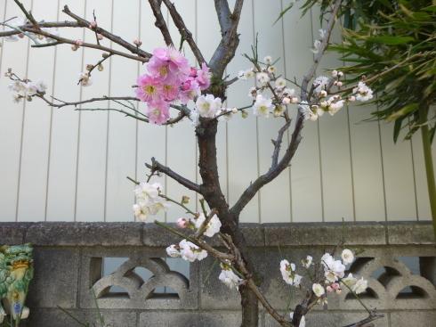 春の香りがもうすぐ_d0268697_11112382.jpg