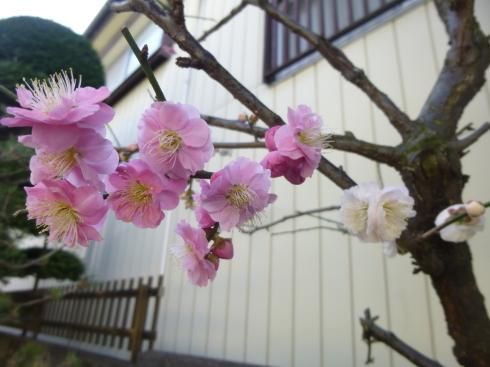 春の香りがもうすぐ_d0268697_11115119.jpg