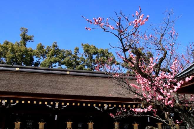 梅花の盛り 北野天満宮1_e0048413_16054572.jpg