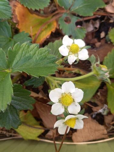 白い花びら_a0039320_00072844.jpg