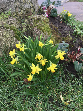 春の花々_f0123922_06024055.jpeg