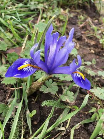春の花々_f0123922_06041911.jpeg