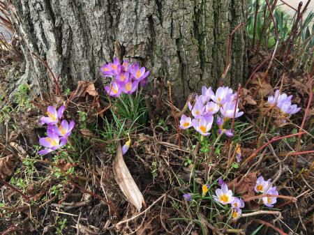 春の花々_f0123922_06061977.jpeg