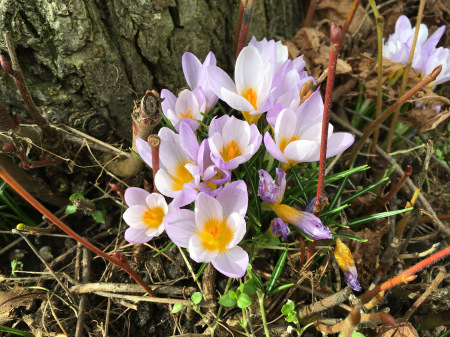 春の花々_f0123922_06082391.jpeg