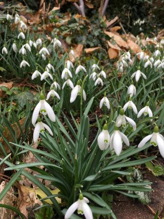 春の花々_f0123922_06185321.jpeg