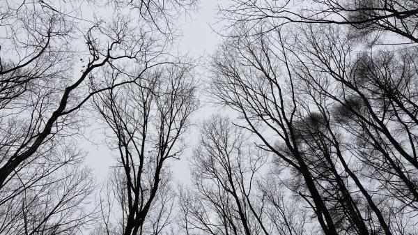 春と冬のおいかけっこ - 今日のフィールド状況_b0174425_13534743.jpg