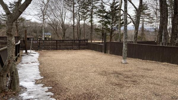 春と冬のおいかけっこ - 今日のフィールド状況_b0174425_15350682.jpg