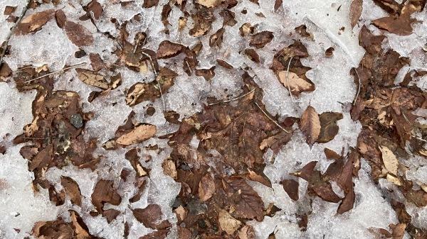 春と冬のおいかけっこ - 今日のフィールド状況_b0174425_16052163.jpg