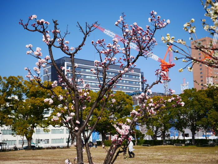和歌山城西の丸広場にて  2021-02-27 00:00_b0093754_17455502.jpg