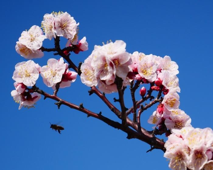 和歌山城西の丸広場にて  2021-02-27 00:00_b0093754_17470830.jpg