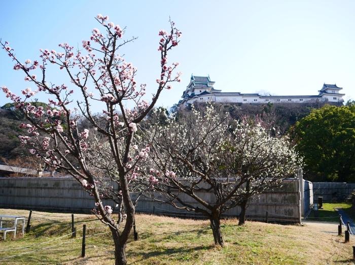 和歌山城西の丸広場にて  2021-02-27 00:00_b0093754_17471634.jpg