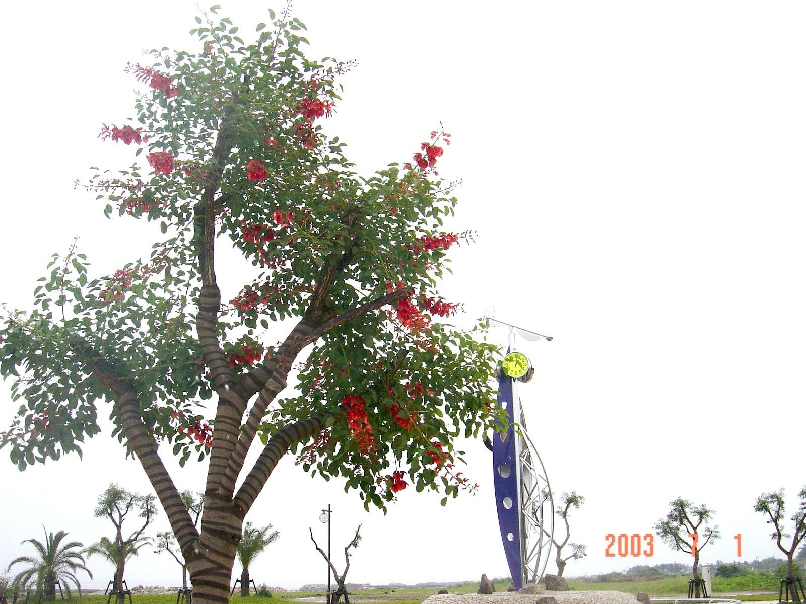 うみべの森の歴史⑭「2003年7月の活動」_c0108460_12205342.jpg