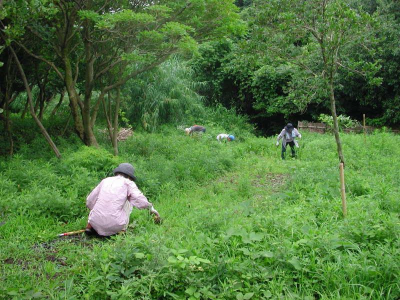 うみべの森の歴史⑭「2003年7月の活動」_c0108460_12225010.jpg
