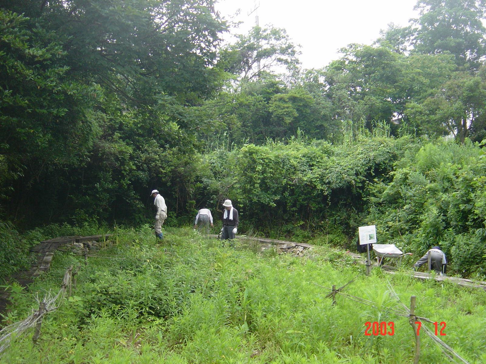 うみべの森の歴史⑭「2003年7月の活動」_c0108460_12225016.jpg