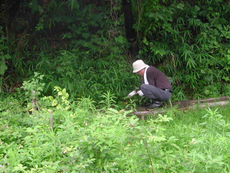 うみべの森の歴史⑭「2003年7月の活動」_c0108460_12225143.jpg