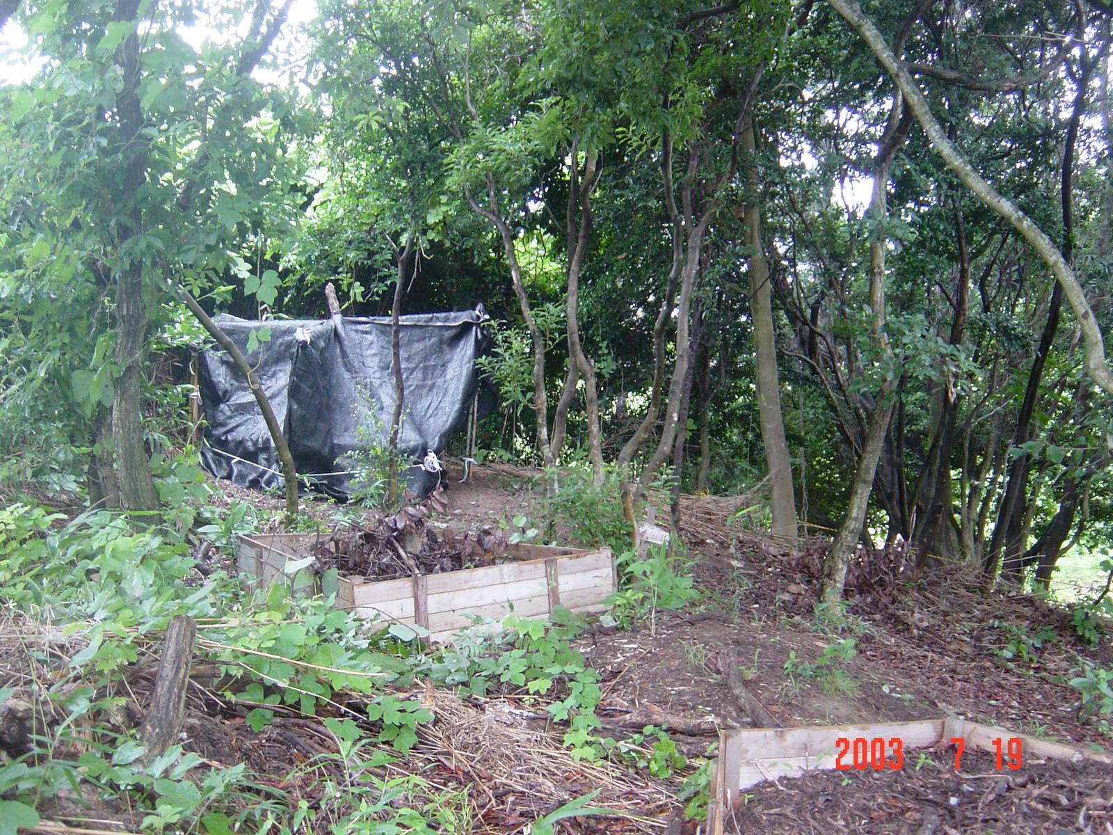 うみべの森の歴史⑭「2003年7月の活動」_c0108460_12401451.jpg