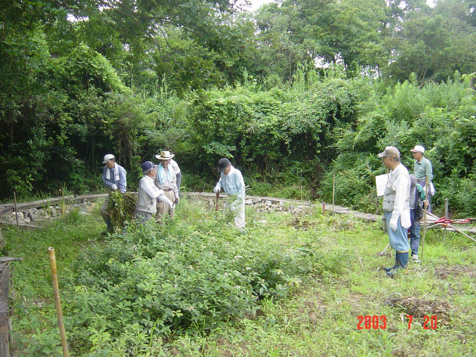 うみべの森の歴史⑭「2003年7月の活動」_c0108460_12422727.jpg