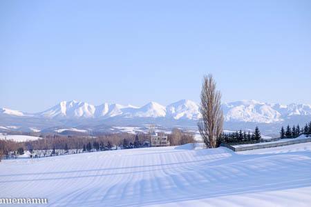 ケンとメリーの木と雪景色~1月の美瑛_d0340565_19534208.jpg