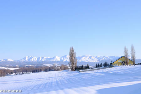ケンとメリーの木と雪景色~1月の美瑛_d0340565_19541373.jpg