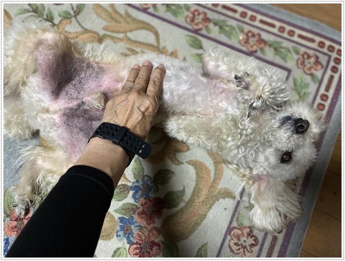 大と一緒に、供血犬のニュースを見たよ。_b0175688_19513099.jpg