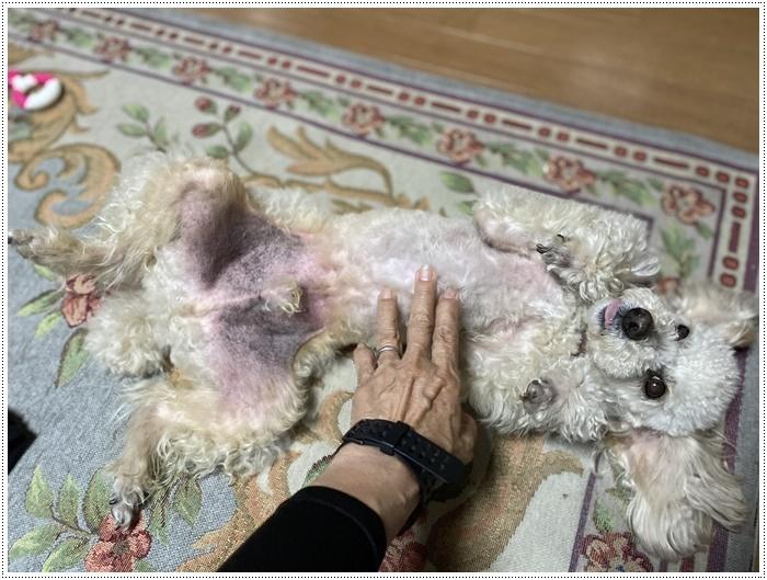 大と一緒に、供血犬のニュースを見たよ。_b0175688_19513682.jpg